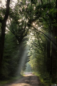Last summer sunrays in the forest
