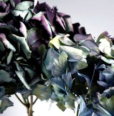 Preserved Macro Blue & Purple Hydrangea's ...how pretty and for $99 for 26-28 flowers they would last for a long time and never die!
