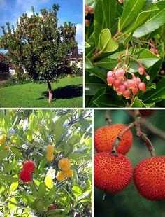 arbutus unedo, strawberry tree Arbutus Unedo, Strawberry Tree, Front Yard Design, Garden Inspiration, Seattle, Trees, Gardening, Flowers, Plants