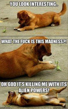 gotta love dogs :D