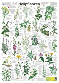 Poison Plants Poster by Planet Poster Editions 59 X 84 cm Paper Thickness 200 g / m² shows 33 poisonous plants- Poisonous Plants, Medicinal Plants, Garden Trees, Garden Plants, Baumgarten, Garden Journal, Healing Herbs, Plantation, Botanical Illustration