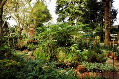 Some of the luscious greenery found at the nursery at Montebello Investment Property, Property For Sale, Cape Town, Greenery, Real Estate, Nursery, Plants, Real Estates, Room Baby