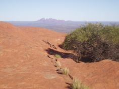 Plant life on top of Uluru - believe it or not!  Kata Tjuta in the background.