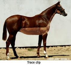 Horse clipping tips