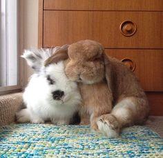 best friends bunnies