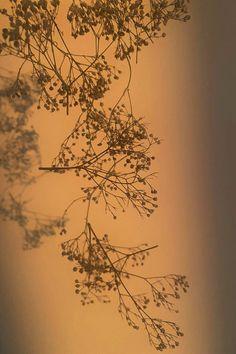 Dried gypsophila with window shadow, minimalistic aesthetic wallpaper