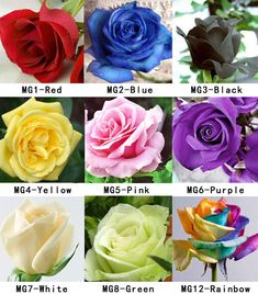 100 Colorful Rare Rose Seeds Fresh Rose Seed For Lover in Home & Garden, Yard, Garden & Outdoor Living, Flowers, Trees & Plants | eBay