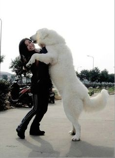 Wonder if our puppy will be this big? He probably will