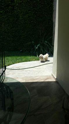 Luca en Monterrey