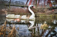 abandoned amusement parks   empty - swan in abandoned ...