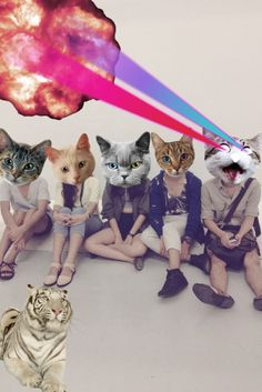 my cat gangster :) Fancy Cats, Cute Cats, Galaxy Cat, Space Cat, Funny Wallpapers, Soft Grunge, Surreal Art, Crazy Cats, Cat Art