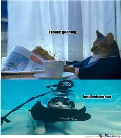 scuba cat
