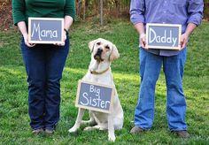 Gravidez e animais é um assunto cercado por mitos e medos! Saiba como se proteger e preparar o seu pet para a chegada do bebê!