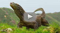 El Dragón de Komodo, el animal venenoso más grande del mundo – Vídeo