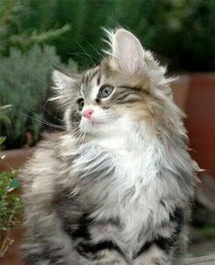 This is just about the cutest little kitty....