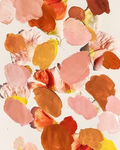 Poppy Palette Artwork by Jasmine Dowling Color Terracota, Illustration Blume, No Rain, Color Stories, Oeuvre D'art, Art Paintings, Color Inspiration, Web Design, Graphic Design