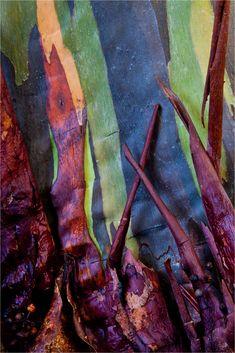http://christophermartinphotography.com/tag/rainbow-eucalyptus/