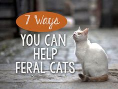 7 Ways You Can Help Feral Cats | eBay