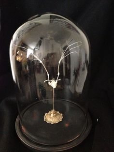 Beautifully Articulated Japanese Bat Skeleton in glass dome for sale by Oddly Custom Creations at MoreThanHorror.com