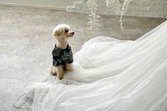 グランピングフォトウェディング&ドッグキャビンステイプランの撮影イメージ Glamping, Wedding Dresses, Bride Dresses, Bridal Gowns, Go Glamping, Weeding Dresses, Wedding Dressses, Bridal Dresses, Wedding Dress