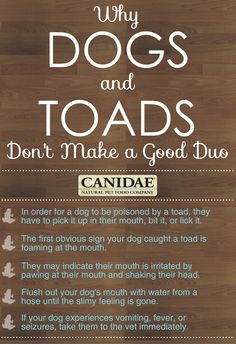 Why Dogs and Toads Don't Make A Good Duo