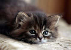 We Heart It の we heart it cat - Google Search - http://weheartit.com/entry/81708780