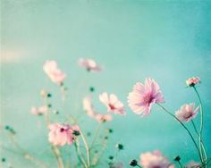 Flower Photography spring aqua pink flower by CarolynCochrane