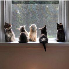 Five Little Kittens on a Windowsill - Tabby Cats - Black Cats - Marmalade Cats - sweet