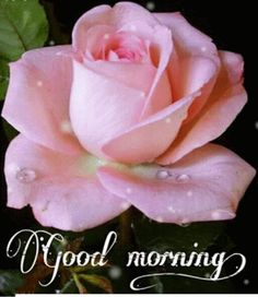 Durga Maa Pictures, Morning Quotes Images, Sexy Legs And Heels, Good Morning Wishes, Most Beautiful Indian Actress, Flowers, Buen Dia, Messages, Accessories