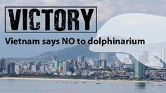 Petition update · VICTORY: Vietnam says NO to dolphinarium!!! · Change.org