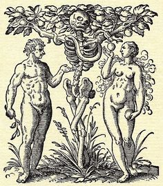 Macabre representation of the Tree of Knowledge and Death. Woodcut by Jost Amman, from Jacob Rueff's De conceptu et generatione hominis, printed by Peter Fabricus, Frankfurt, Eve Tattoo, Adam Et Eve, Medieval Paintings, Occult Art, Danse Macabre, Antique Illustration, Inspiration Art, Vanitas, Medieval Art