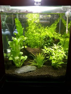 Aquascape.jpg 7.9 gal This would make a great tank for a Siamese Fighting Fish / Betta!
