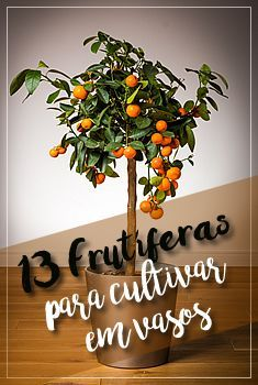 13 Árvores Frutíferas para cultivar em vasos. #agriculturaurbana #frutas… Mais