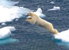 Google Image Result for http://0.tqn.com/d/adventuretravel/1/0/9/7/-/-/Mountain_Travel_Sobek_High_Arctic_Explorer.jpg