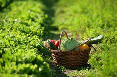10 frutos e legumes para plantar em casa