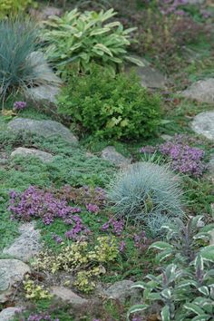 HAVETID: Den fredfyldte have ved midsommertid. Purple Perennials, Rock Garden Plants, Buxus, Ground Cover Plants, Purple Garden, Potted Trees, Drought Tolerant Plants, Small Trees, Water Features