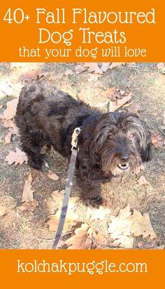 Fall Flavoured Dog Treats