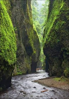 Fern Canyon, Coast, Northern California. <3