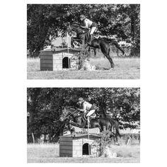Pferdefotografie · Pferdefotograf · Horse Photography · Horse Photoshoot · Equine Photography · Equestrian Photography · Equine Photoshoot · Pferdefotos · Horse Pictures · Schwarz Weiß Fotografie · Black White Photography · Eventing Photography · Showjumping · Eventers Equestrain · Eventer Horses · Eventers Equestrian Cross Country · Cross Country Horse Photography · Cross Country Horse Riding · Cross Country Equestrian Equine Photography, White Photography, Horse Pictures, Horse Riding, Cross Country, Equestrian, Black White, Photoshoot, Horses