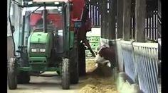 alimentation des bovins - YouTube