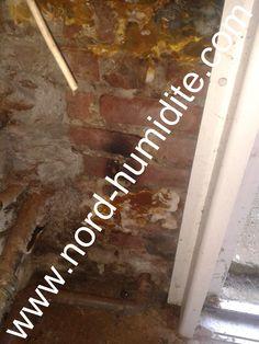 spores de merule dans une cave merule champignon sur le. Black Bedroom Furniture Sets. Home Design Ideas