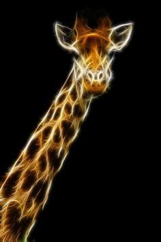 ˚Fractal Giraffe