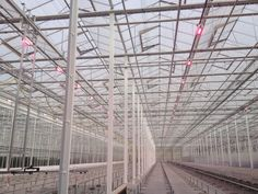New LED lights, step towards sustainable cultivation | Koppert Cress Benelux
