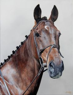 Equine Artist: Sally Lancaster on Cavalcade Horse Drawings, Realistic Drawings, Race Horse Breeds, Horse Oil Painting, Oil Pastel Colours, Colored Pencil Artwork, Traditional Artwork, Original Art For Sale, Equine Art
