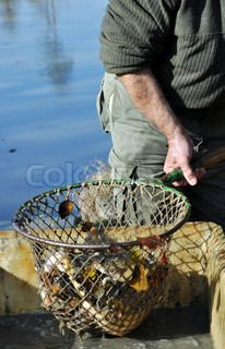 Your search for 'net fisher' returned 530 results