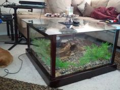 DIY fish tank coffee table..... so gonna do this n put the snake in it ;)