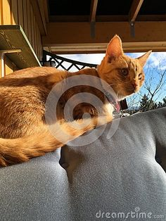 Photo about The cat Roder out on the porch. Image of abstract, chase, black - 67907167 Porch, Stock Photos, Abstract, Cats, Animals, Image, Black, Balcony, Summary