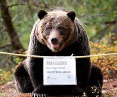 Grizzly bear hazard