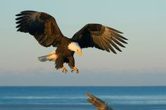 Just Before Touchdown                     by Harry  Eggens