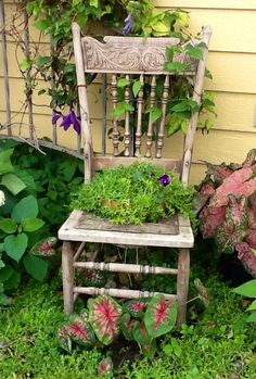 Not sure if I could sacrifice a chair but it would look super cute x Old Chairs, Vintage Chairs, Outdoor Chairs, Outdoor Decor, Garden Seating, Garden Chairs, Chair Planter, Farmhouse Chairs, Coastal Gardens